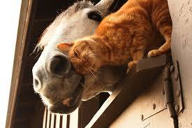 cat and horse barn buddies