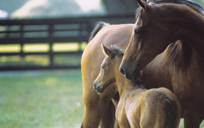 Health Plans for Brood Mares